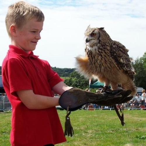 Boy with hawk on arm