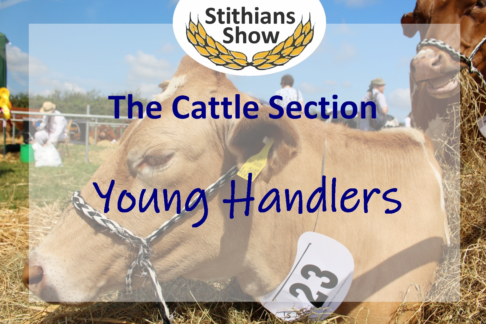 Cattle Section Young Handlers